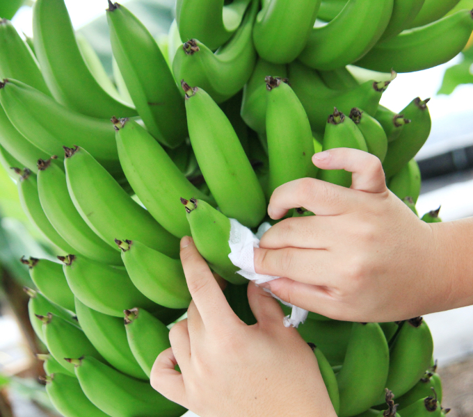 バナナ事業のイメージ